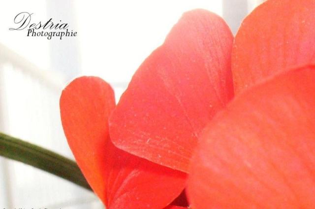 Destria Photographie - Végétaux Destri14