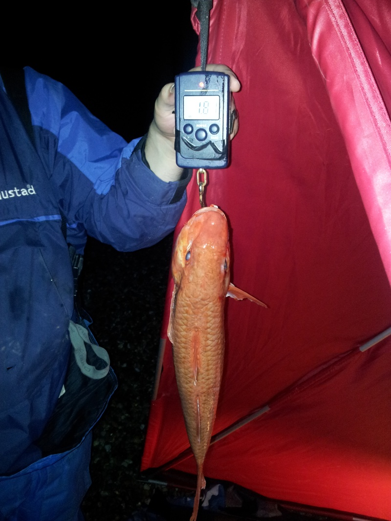 red mullet record 2011-115
