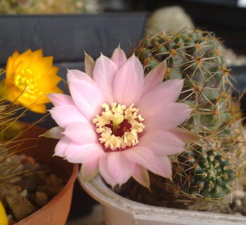 Hab auch Blüten ^^ 31032010