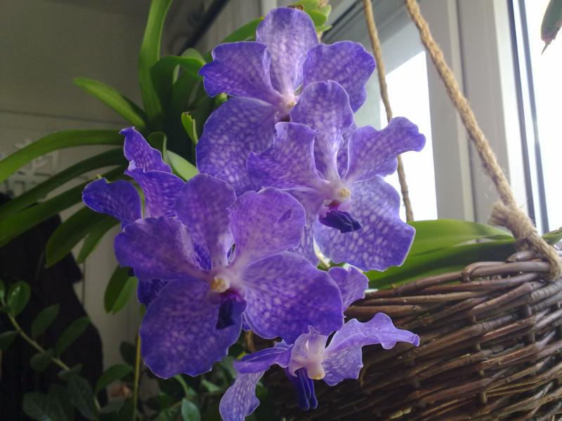 Orchideen - Seite 4 K800_012