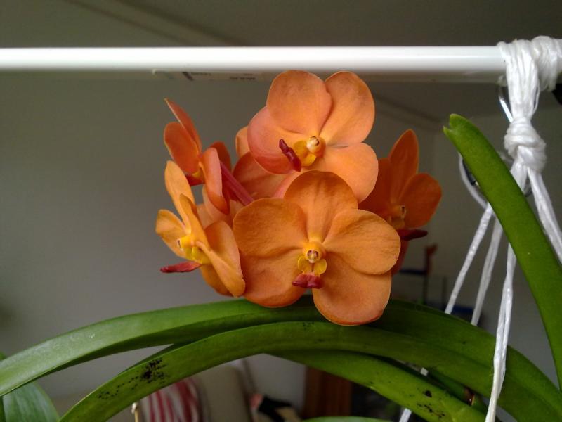 Orchideen - Seite 4 K800_216