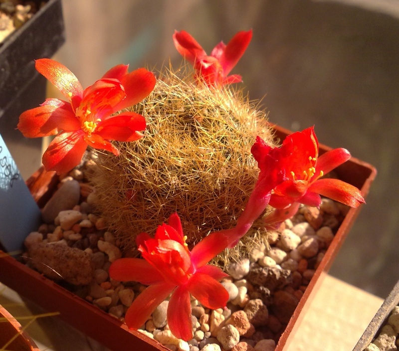 Hab auch Blüten ^^ Rebuti10