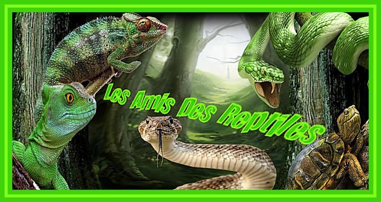 les amis des reptiles