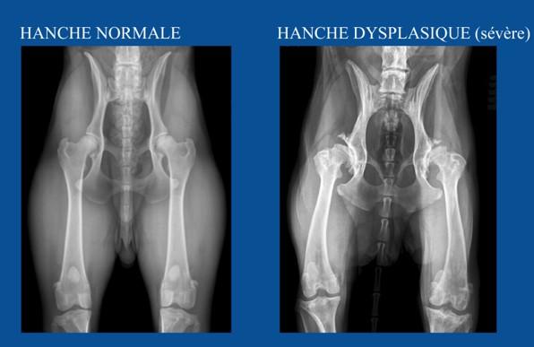 Снимки на дисплазию тазобедренного сустава у собак примеры деформирующий артроз локтевого сустава 1 степени