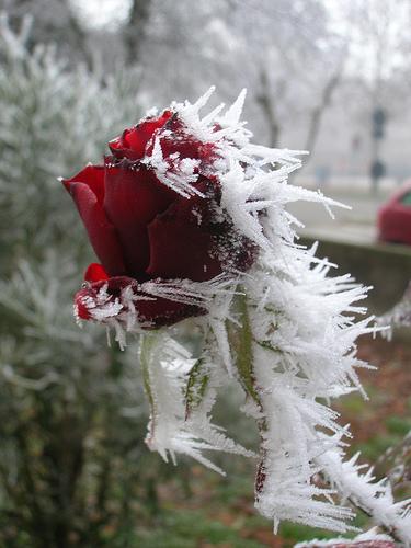De toi je m'ennuyais (Lettre d'hiver, partie 2) Frozen10