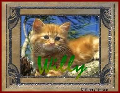 Willy le Chat Willyb10