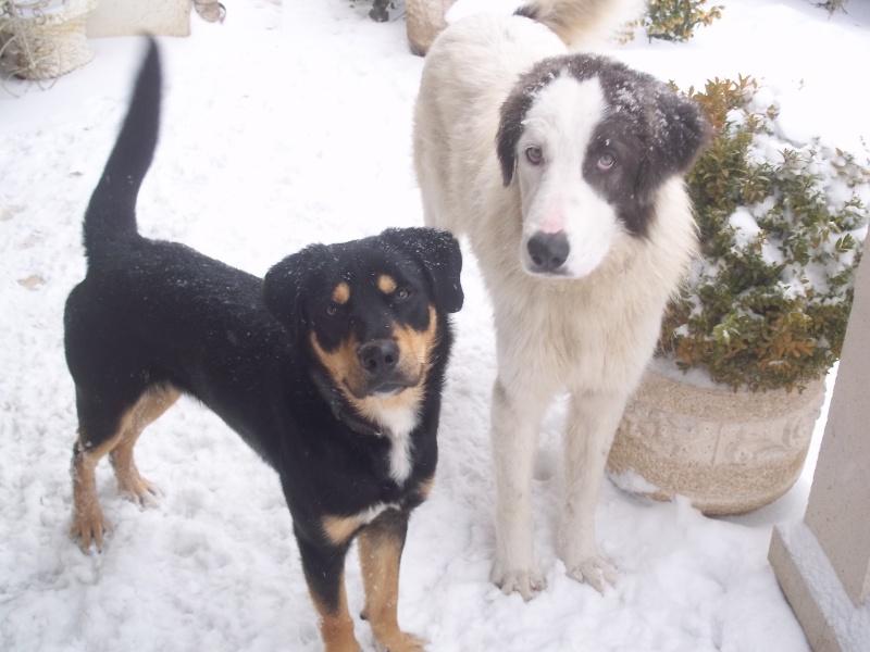 Fuego & Gaspard sous la neige 100_6810