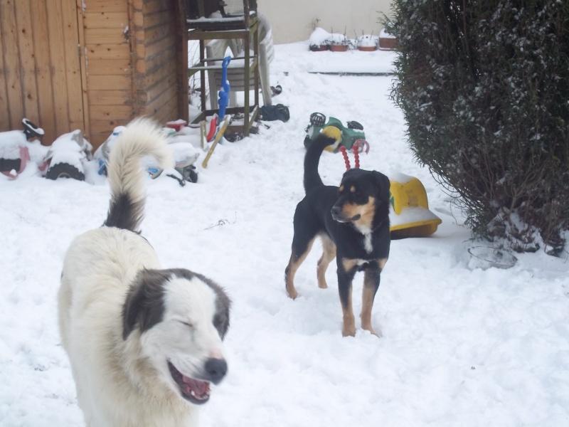 Fuego & Gaspard sous la neige 100_6911