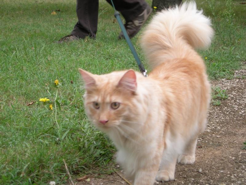 Spécials Photos : Avant/Après de nos chats - Page 5 Dscn2210