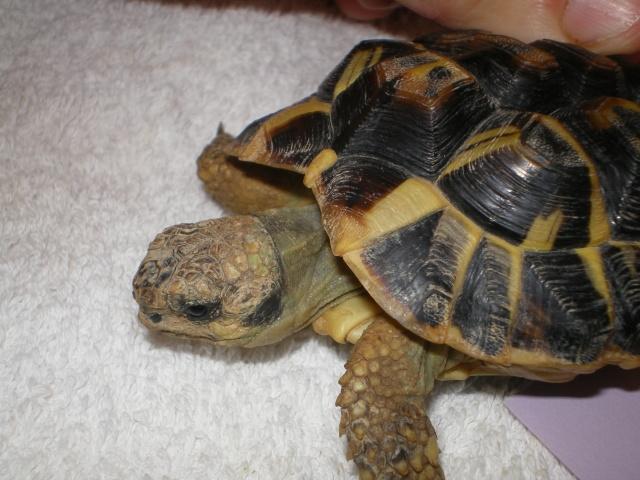 Vérote : présentation de mes 8 tortues pour identification / N° 1, 2 (BOUTON et PRESSION) Imgp0023