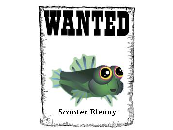 Début de l'aventure Wanted10