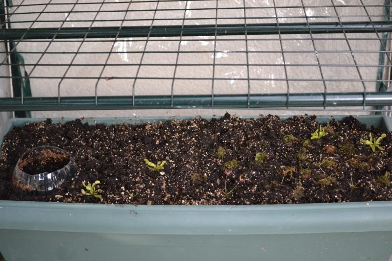Serre balcony Dsc_0322