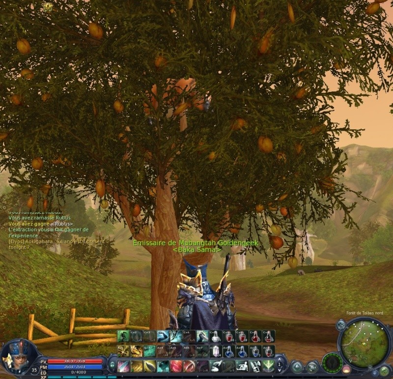 le cochon dans l'arbre Aion0010