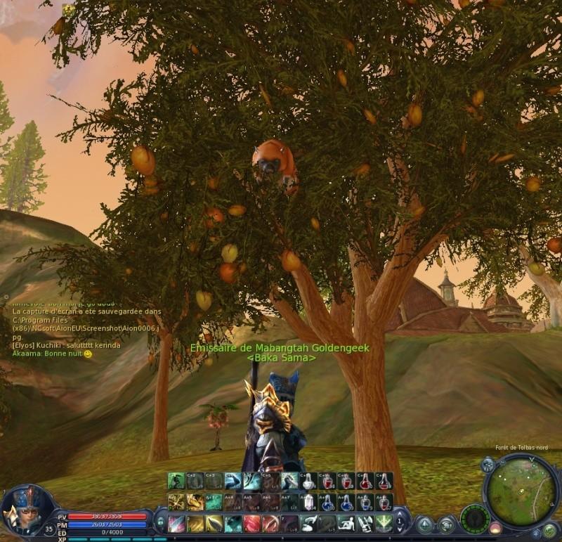 le cochon dans l'arbre Aion0011