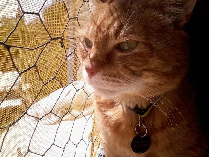 Wizley recherche une nouvelle FA... ou des adoptants :-) Photo156