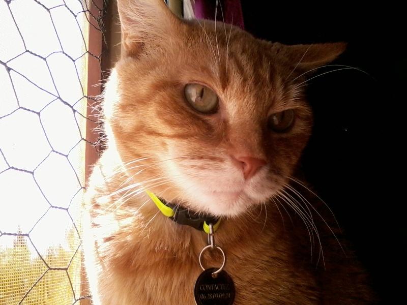 Wizley recherche une nouvelle FA... ou des adoptants :-) Photo158
