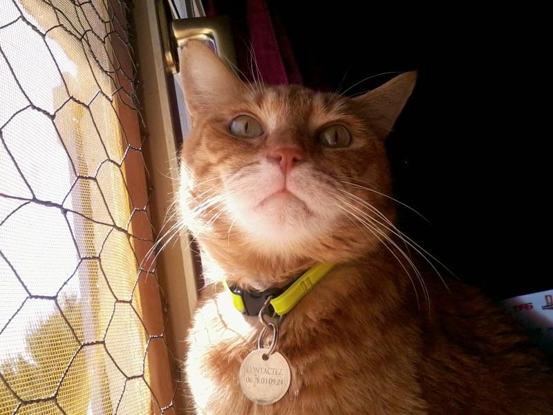 Wizley recherche une nouvelle FA... ou des adoptants :-) Photo159