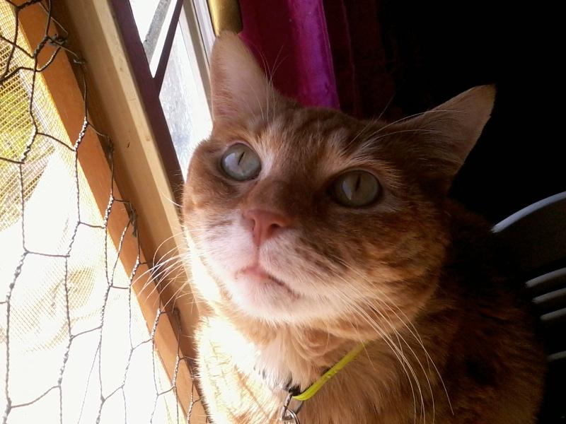 Wizley recherche une nouvelle FA... ou des adoptants :-) Photo160