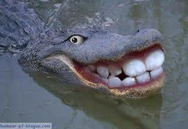 Crocodile dundee est passé par là !  Crocod10