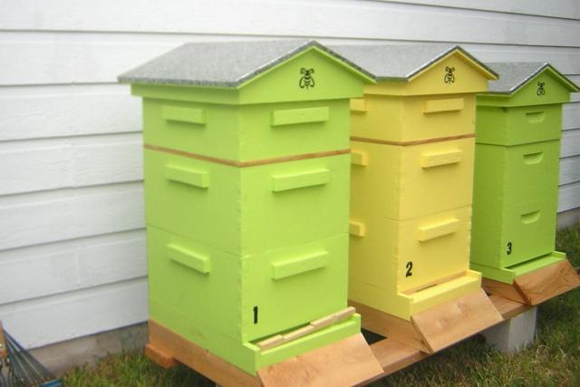 décoration de ruches Dscn3510