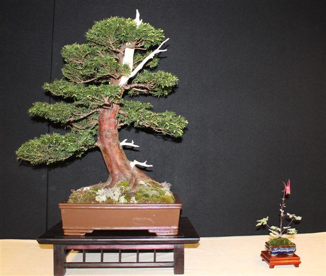 Mostra bonsai e Trofeo Città di Arzignano 25 aprile 2012 25-04-11