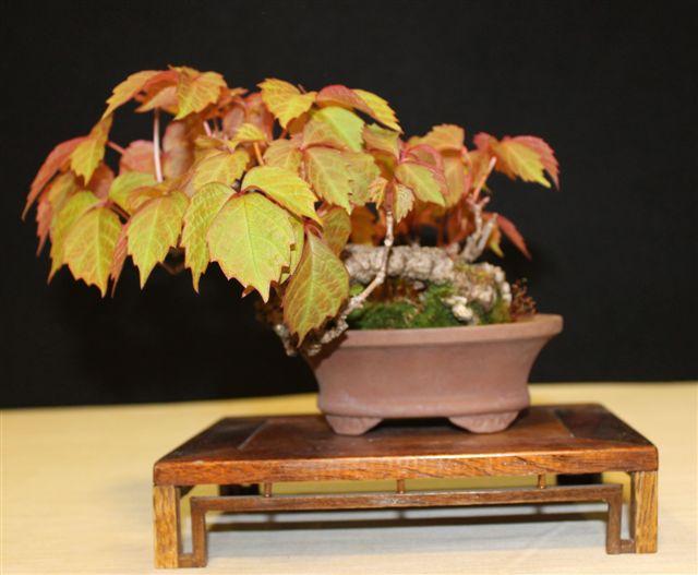 Mostra bonsai e Trofeo Città di Arzignano 25 aprile 2012 25-04-14