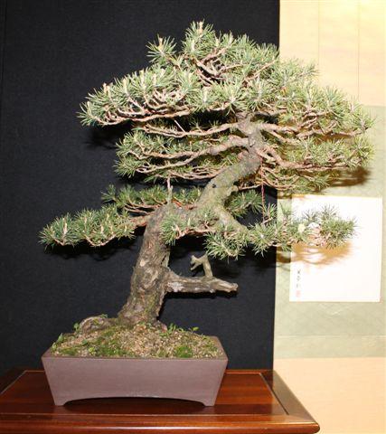 Mostra bonsai e Trofeo Città di Arzignano 25 aprile 2012 25-04-15