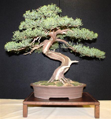 Mostra bonsai e Trofeo Città di Arzignano 25 aprile 2012 25-04-16