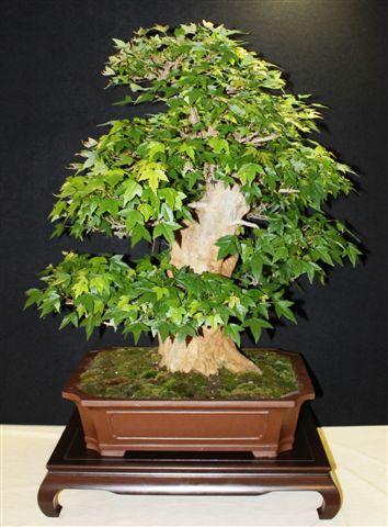 Mostra bonsai e Trofeo Città di Arzignano 25 aprile 2012 25-04-17