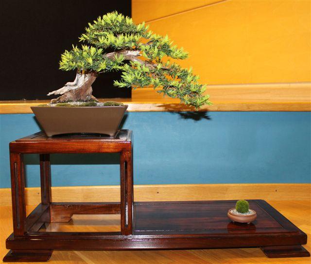 Mostra bonsai e Trofeo Città di Arzignano 25 aprile 2012 25-04-18