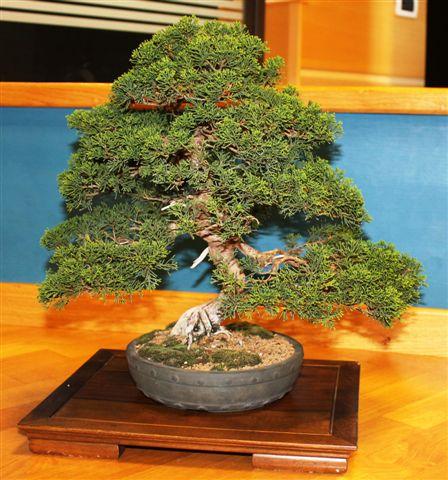 Mostra bonsai e Trofeo Città di Arzignano 25 aprile 2012 25-04-19