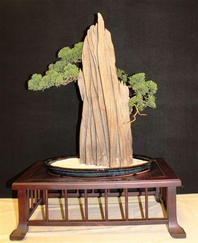 Mostra bonsai e Trofeo Città di Arzignano 25 aprile 2012 25-04-21