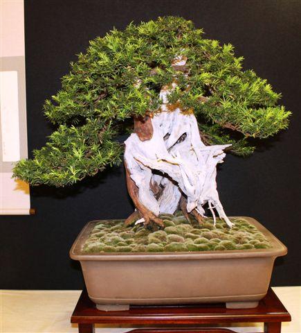 Mostra bonsai e Trofeo Città di Arzignano 25 aprile 2012 25-04-25