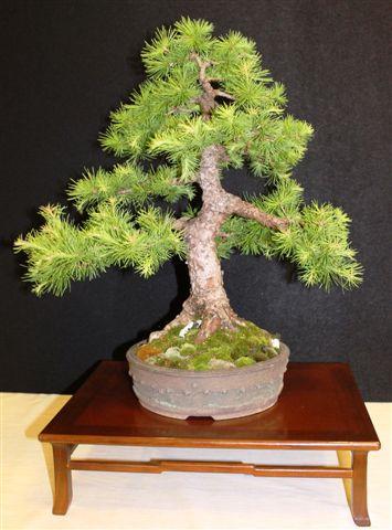 Mostra bonsai e Trofeo Città di Arzignano 25 aprile 2012 25-04-30