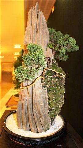 Mostra bonsai e Trofeo Città di Arzignano 25 aprile 2012 25-04-32