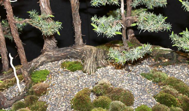 Mostra bonsai e Trofeo Città di Arzignano 25 aprile 2012 25-04-33