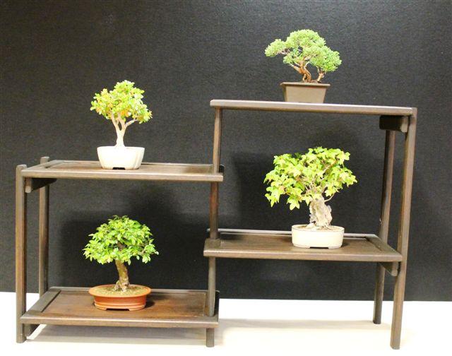 Mostra bonsai e Trofeo Città di Arzignano 25 aprile 2012 25-04-35