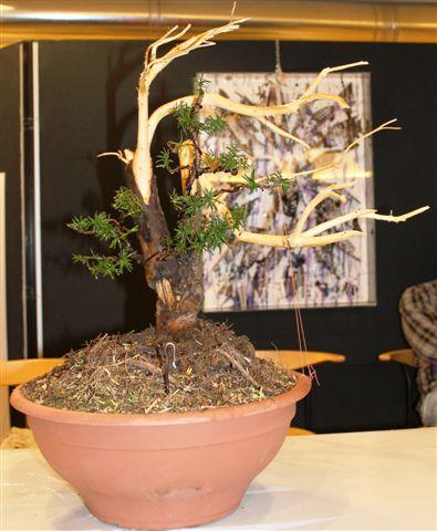 Mostra bonsai e Trofeo Città di Arzignano 25 aprile 2012 25-04-36