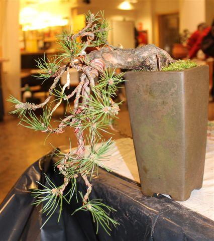 Mostra bonsai e Trofeo Città di Arzignano 25 aprile 2012 25-04-39