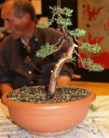 Mostra bonsai e Trofeo Città di Arzignano 25 aprile 2012 25-04-41
