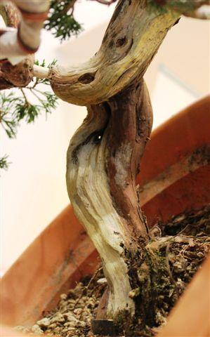 Mostra bonsai e Trofeo Città di Arzignano 25 aprile 2012 25-04-43