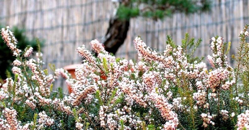 la bellezza della primavera ... Foto_011