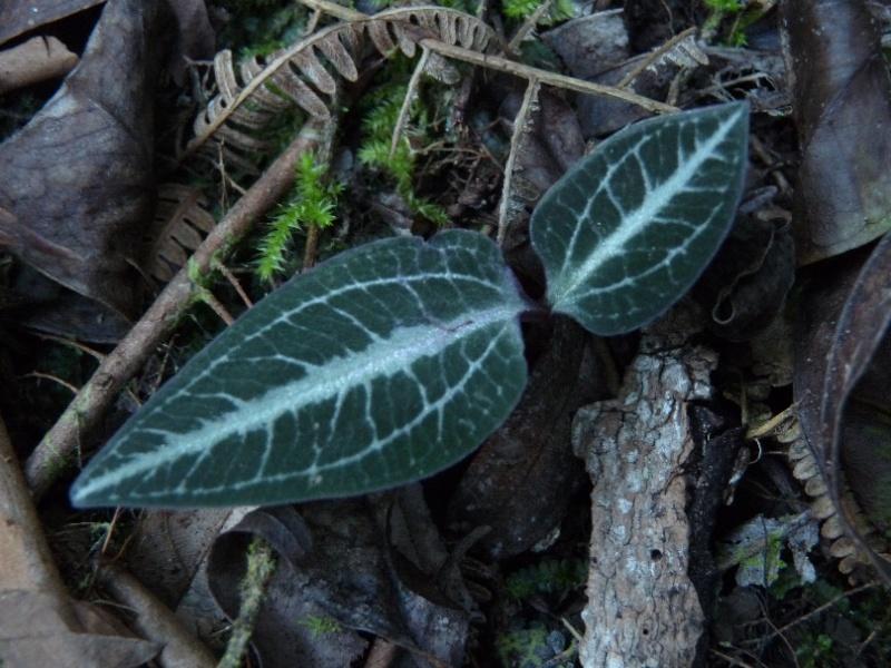 Inédit: photos de la campagne orchidentielle  011112