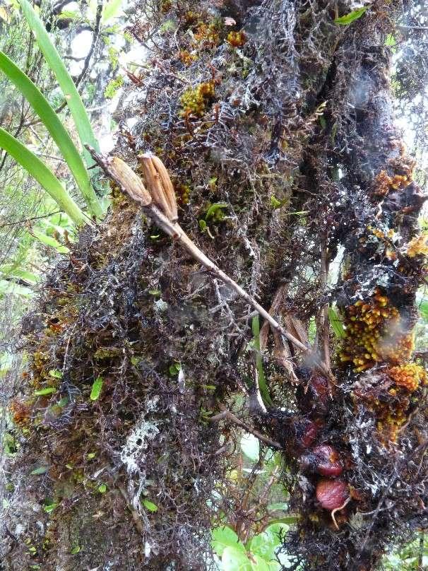 Inédit: photos de la campagne orchidentielle  046112