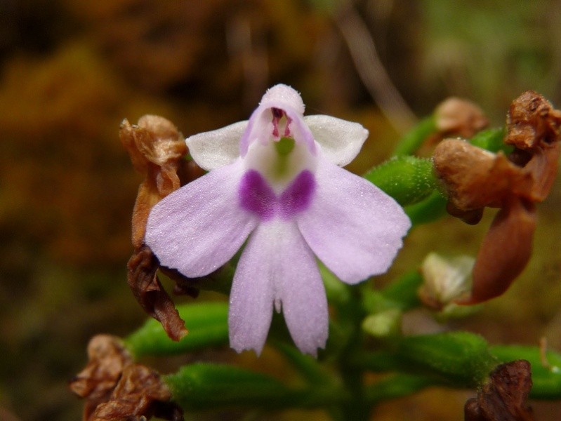 Inédit: photos de la campagne orchidentielle  088110