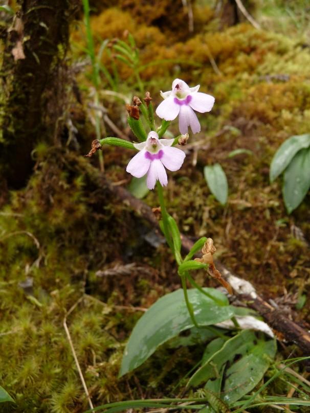 Inédit: photos de la campagne orchidentielle  094110