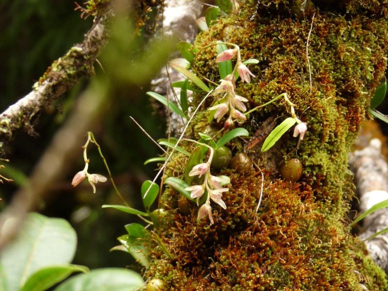 Inédit: photos de la campagne orchidentielle  103110