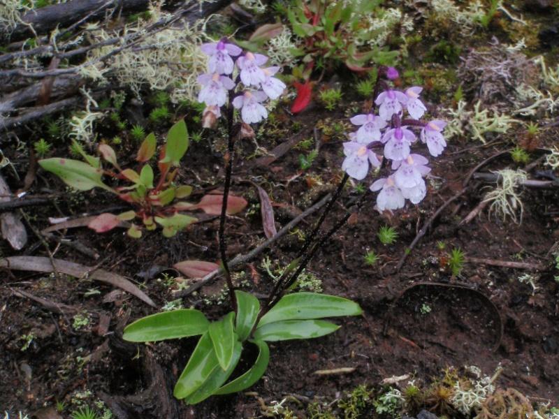 Inédit: photos de la campagne orchidentielle  198110