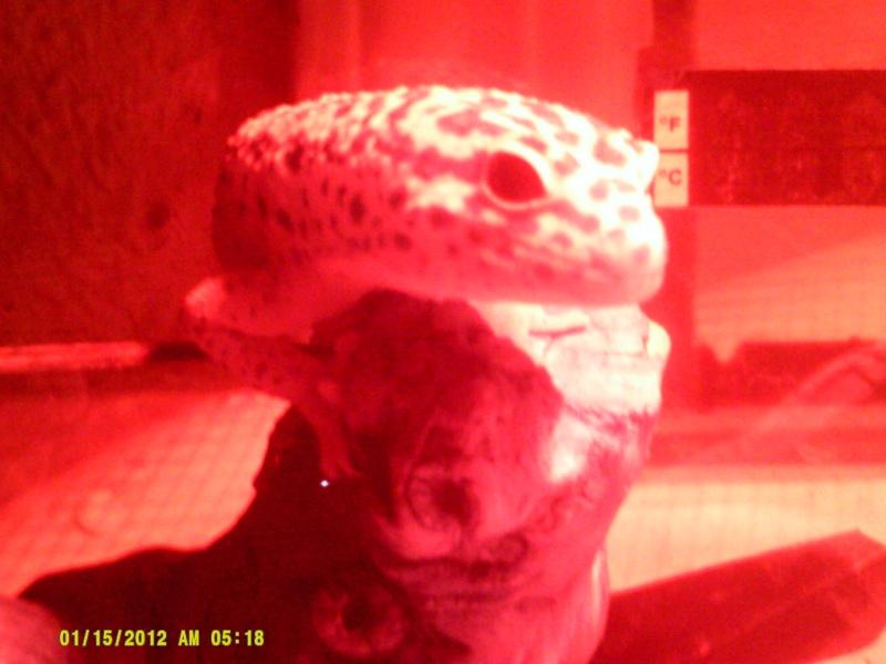 Leopard Gecko Post! Dscf0016