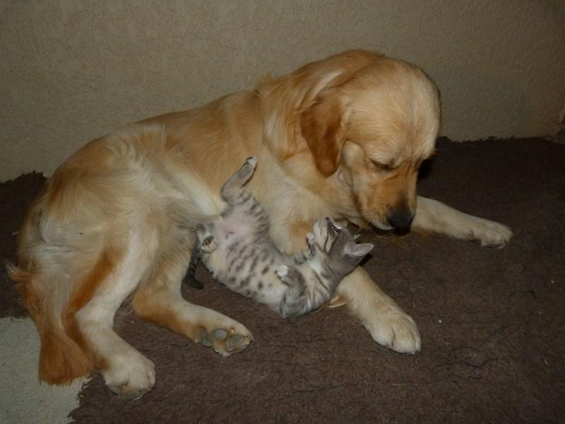 Chat et chien Akio_e14